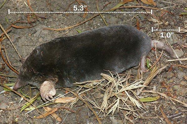 thanks to ALAN SCHMIERER, CC0, via Wikimedia Commons
